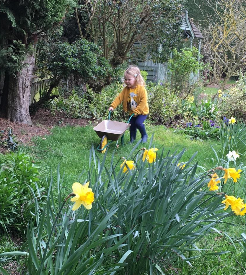 A young child pushing a small wheelbarrow in a garden on a Spring day, with daffodils in the foreground.