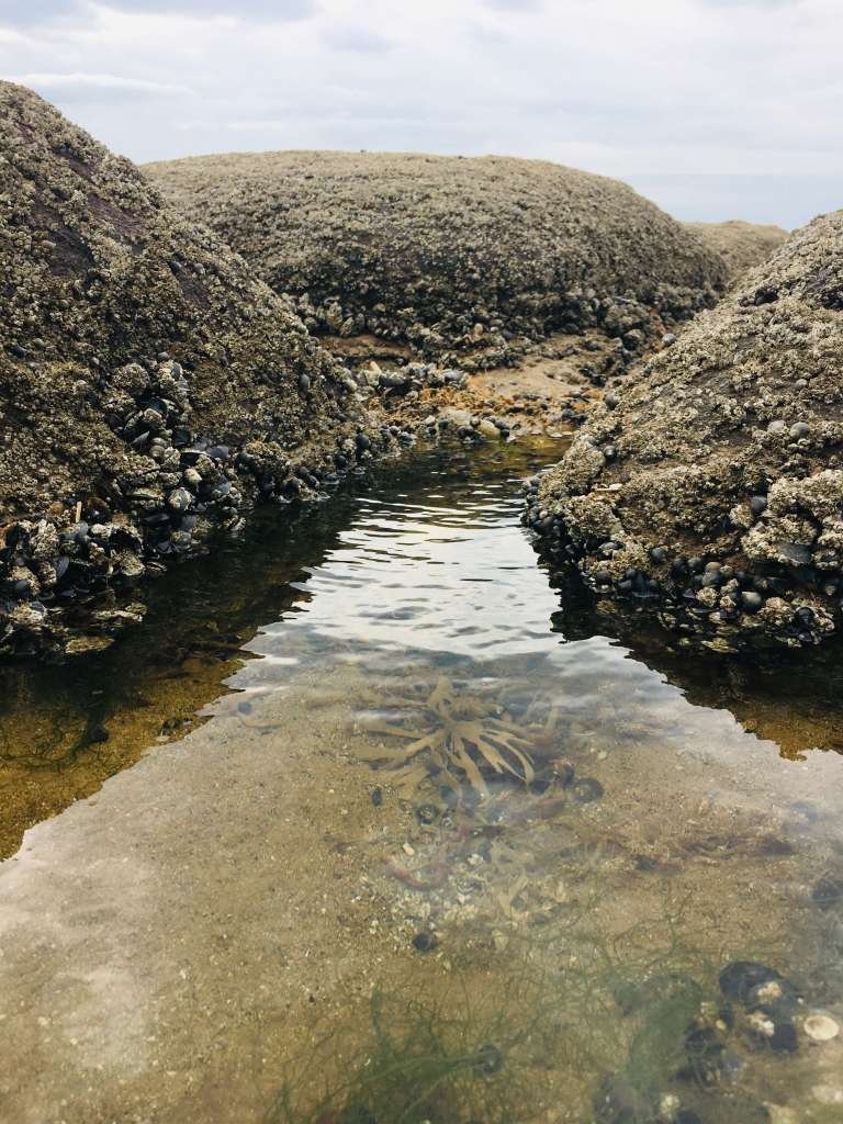 Tapering between two barnacled rocks, the surface of a mysterious rock pool (or tide pool) reflects late afternoon sunlight - seaweed is visible at the bottom of the pool