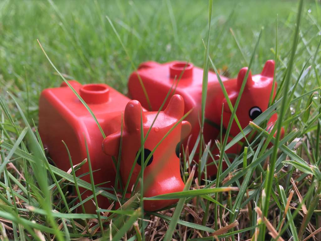 Two toy Dulplo cows are pictured, close-up on a green lawn