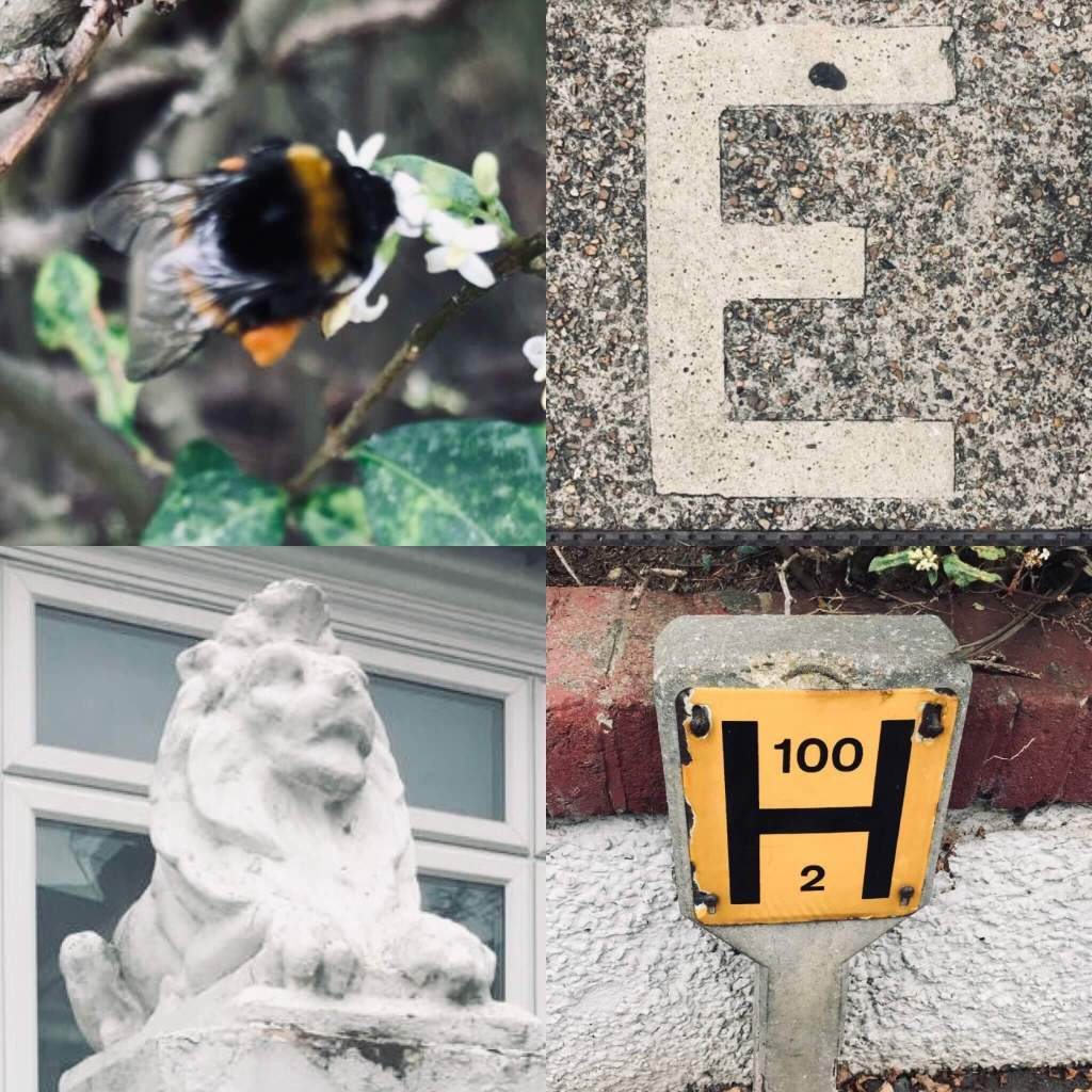 A collage of images of nature and street furniture taken by a child - a letter on a drain cover, a fire hydrant marker, a concrete lion on a gate post, and a bee investigating a flower