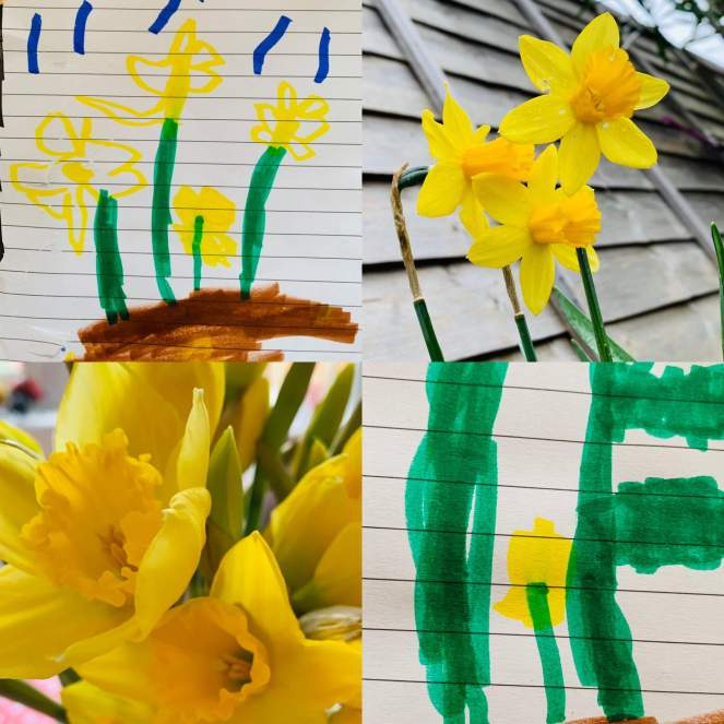 A montage of images of daffodils and a preschool child's drawings of daffodils